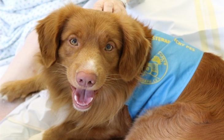 Nemocnice Jihlava: Pacienty opět léčí na duši profesionálně vycvičený pes