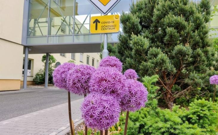 Nemocnice Písek má dalšího zahradníka
